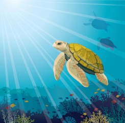 Turtle, coral reef, fishes and underwater sea.