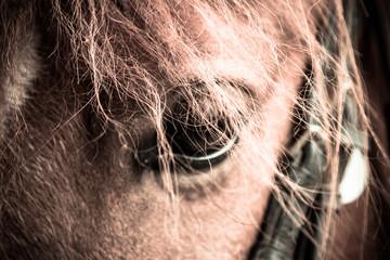 Acrylic Prints Horses Oog van een paard