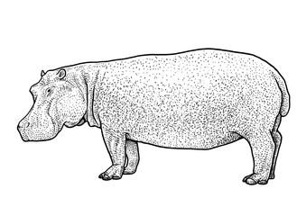 Hippopotamus illustration, drawing, engraving, ink, line art, vector