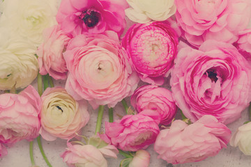 Pink and white fresh ranunculus flowers close up background, retro toned
