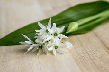 Wild garlic in the kitchen, allium ursinum