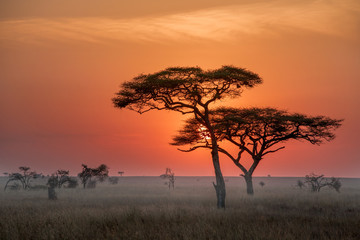 time to sunrise at serengiti nutural park from tanzania very beautiful should go there to take a photo