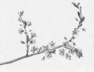 Cherry tree flowering ink painting