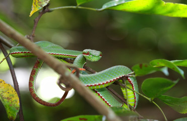Green snake in forest Wall mural
