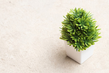 Small tree in white pot on concrete floor, copy space, textured
