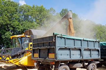 Combine harvester unloading wheat grain into trucks trailer on a bright sunny summer day