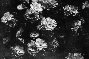 Vintage flowery backgrounds,black and white