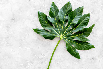 Big leaf of tropical plant on light grey background top view copyspace