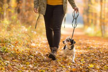 Frau geht im Herbst mit Hund im Wald spazieren - Jack Russell Terrier 7 Jahre alt
