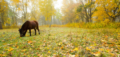 horse standing on forest