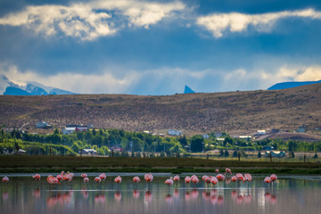 Beautiful pink flamingos on a background of mountains. Shevelev.