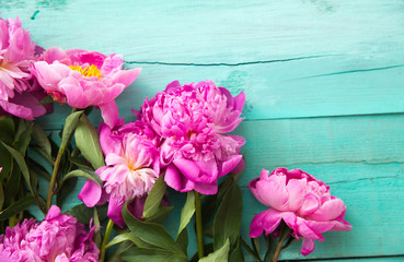 pink peonies on a turquoise background