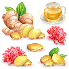 Set vector illustration of a fresh ginger root, sliced, flower and ginger tea isolated on white background. Print, template, design element for packaging.