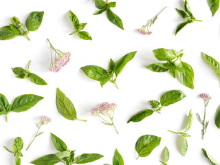 Fototapete - Green basil leaves on white background. Basil pattern. Floral and plants on white background. Top view, flat lay. Flower pattern.
