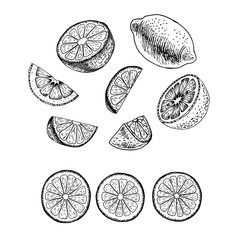 Hand drawn set of lemon. Vector sketch