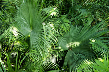 Exotic palm leaves as background