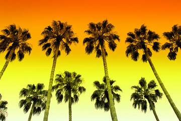 Palm trees with colors of sunset sky