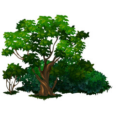 Large detailed tree in cartoon style. Nature, forest, ecology concept. Vector illustration isolated on a white background
