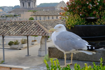 Seagull on roof with Rome city centre as background