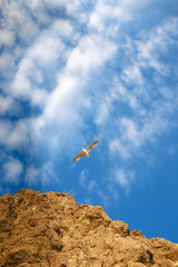 Seagull in the sky. Flight of bird. Freedom. Wings. Rear background of the sky with clouds. A gull flies high above the rocks. Mountains and sky.Beautiful clouds with a seabird spreading its wings.