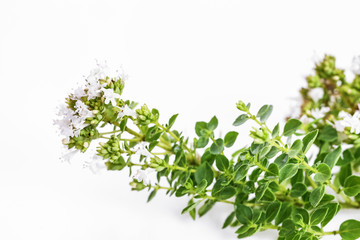 Thyme bouquett, spice, herb, bloom