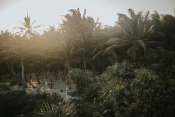 Green palms in sunlight