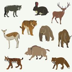 Set of forest animals. Bear, bison, wild boar, fox, wolf, llama, lynx, moose