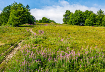 path uphill through the meadow with fireweed