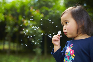 little asian girl blowing dandelion