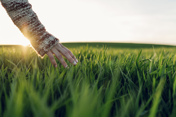 Young woman touching straws in the green fields and sunset moment