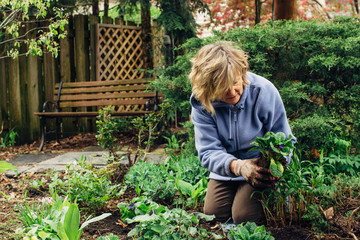 Middle age woman workin in her garden