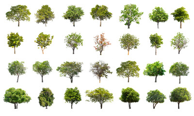 Collection of Tree isolated on a white background, Can be used for part assembly to your designs or images. Wall mural