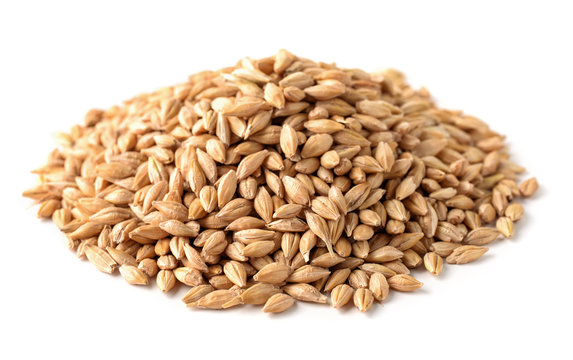 Pile of barley seeds
