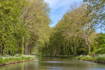 green Canal du Midi in spring summer