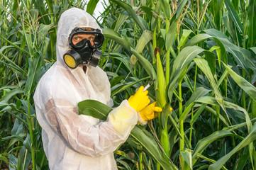 GMO scientist in coveralls genetically modifying corn (maize)