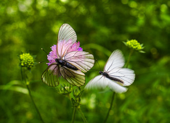 Macro photography. Butterflies.