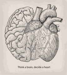 Heart with half brain of human together. Hand drawn print. Design element. Tattoo black linear art. Decorative beautiful object isolated white background. Copy text space Think a head decide a heart