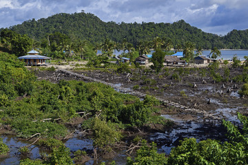 "Mangrove deforestation clearcutting in Eastern Misool Island, Raja Ampat, Western Papua, Indonesian controlled New Guinea, on the Science et Images ""Expedition Papua, in the footsteps of Wallace"", by Iris Foundation"