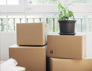 Cardboard boxes with potted plant by window at new house