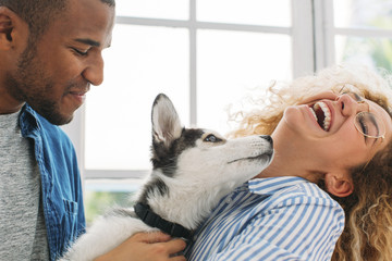 Cheerful couple playing with Siberian Husky at home