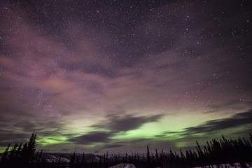 Scenic view of aurora borealis over the trees at night