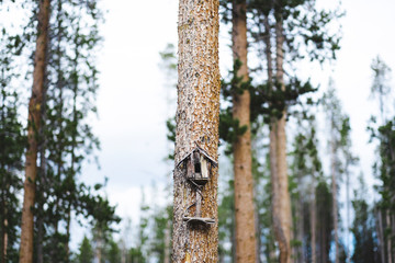 Birdhouse on tree trunk in forest