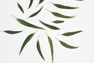 Nature background - high angle view of eucalyptus leaves scattered on white table