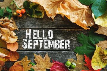 hello September card, Autumn composition from leaf. vintage forest filter