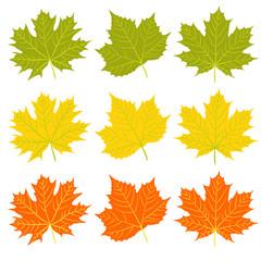 Set of autumn fallen leaves