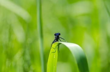 Dragonfly macro detail