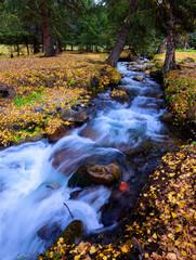 ravine stream and fallen leaves