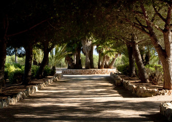 Alley in cactus garden at island Majorca, Balearic Islands, Spain.