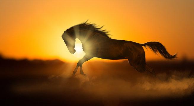 Dark horse runs on sunset background in dust
