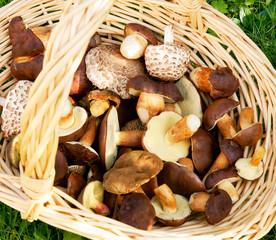 Mushrooms, frische Pilze aus dem Wald im Korb